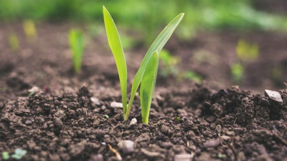Grasssoil