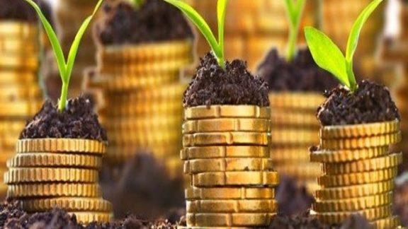 Plants Growing On Money