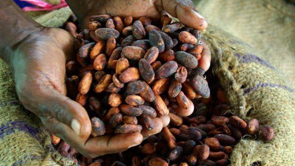 Cocoa Farmer 1200x800