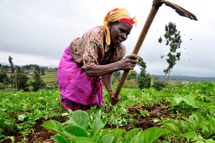 A picture of an African woman farming with a hoe.