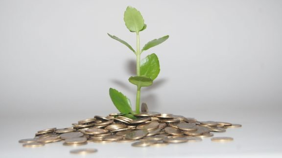 Plant with coins