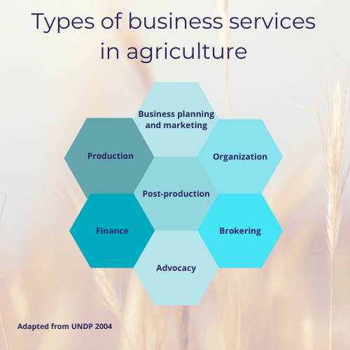 A graphic showing the types of business services in agriculture, adapted from UNDP 2004. The types are: business planning and marketing, organization, brokering, advocacy, finance, production, and post-production.